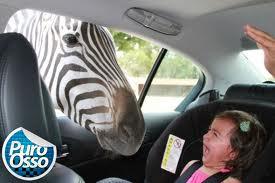 zebra - menina